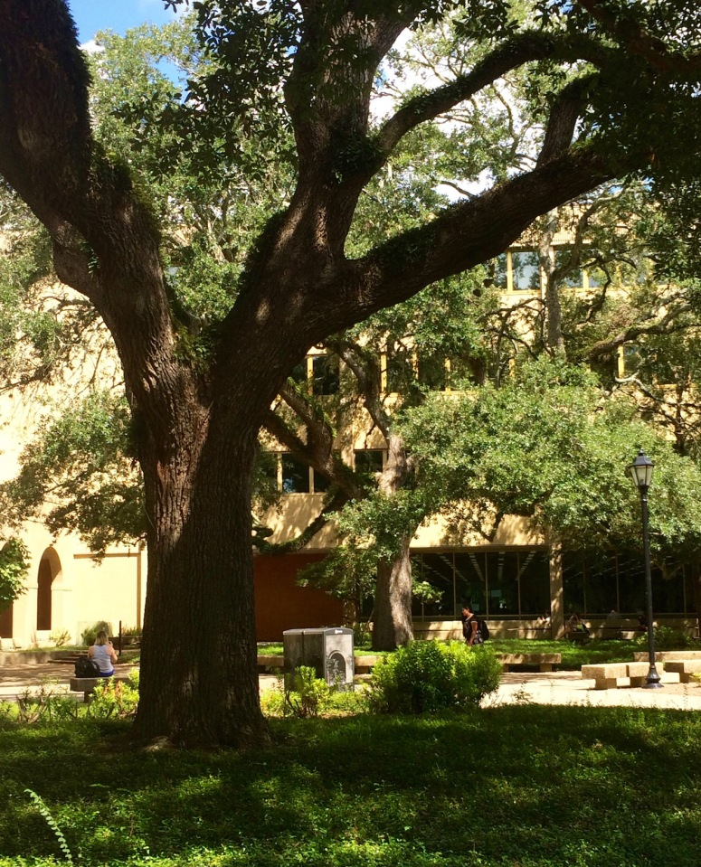 LSU library. Photo credit: Cecelia Morise
