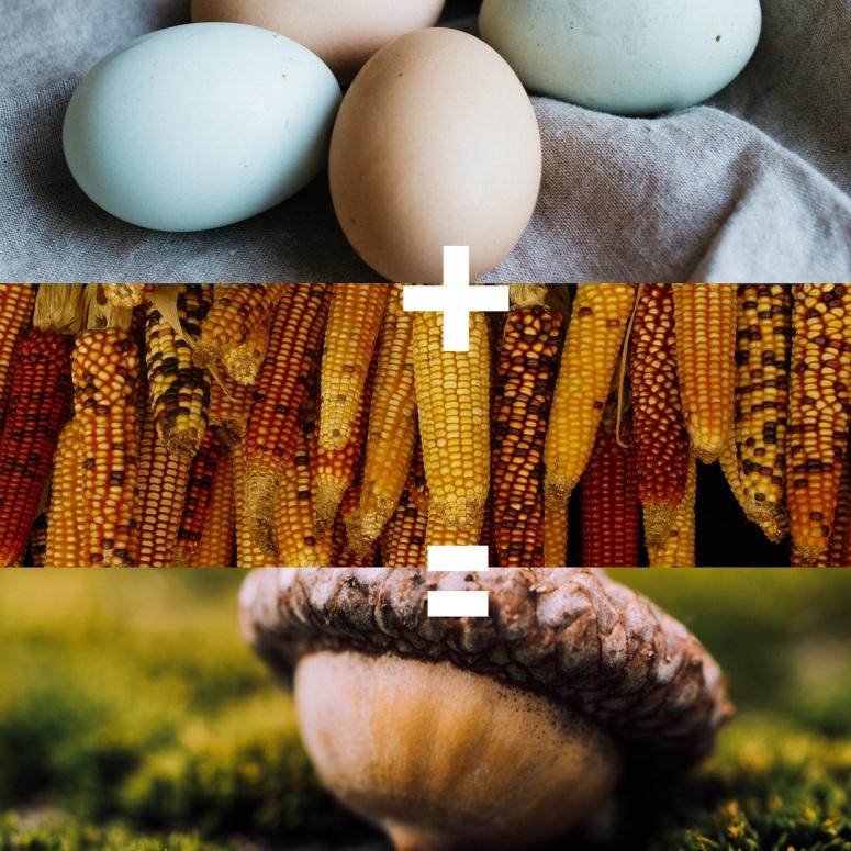 eggcorn
